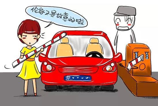 高速上撞了动物保险公司赔吗? 搜狐汽车 搜狐网